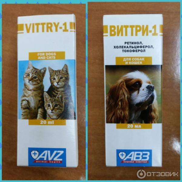 Виттри-1 для кошек: инструкция по применению
