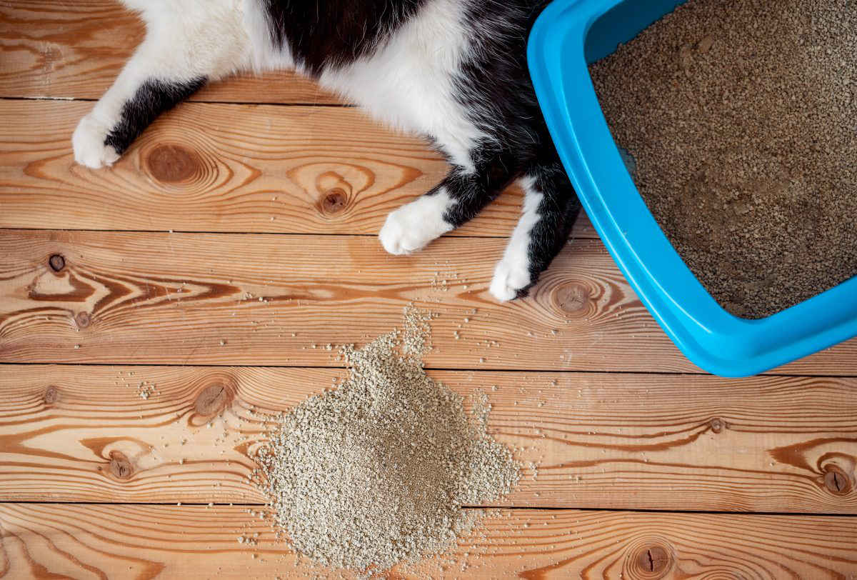 Как приучить котенка к лотку в квартире за 1 день: используя наполнитель или без него
