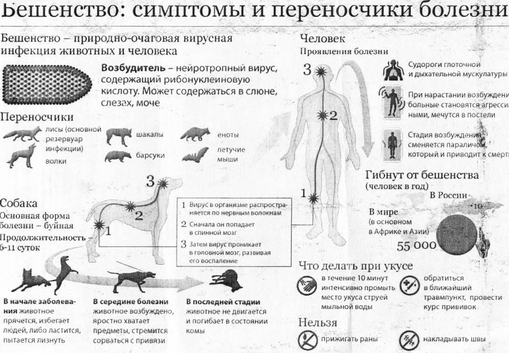 """Бешенство у собак и кошек - симптомы, диагностика и профилактика в москве. ветеринарная клиника """"зоостатус"""""""
