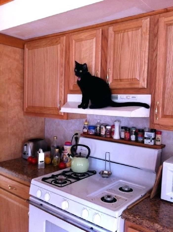Как отучить кошку лазить по столам, воровать еду и прыгать на подоконник
