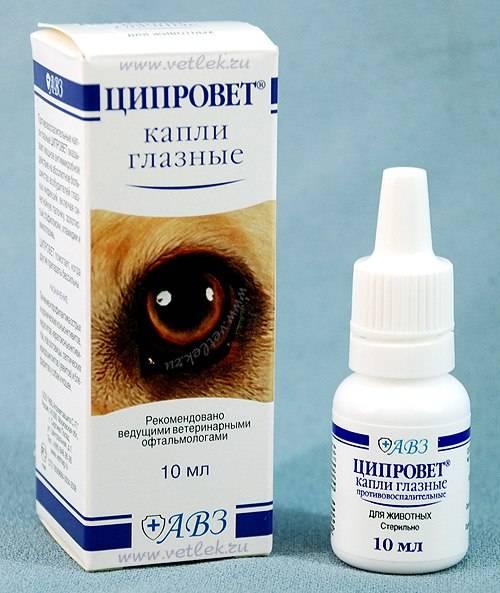Глазные капли для кошек: бриллиантовые глаза, ирис, ципровет, барс и другие, обзор, отзывы