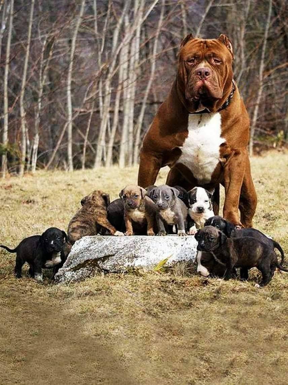 Самые сильные собаки в мире — топ-10 пород с фото и описанием