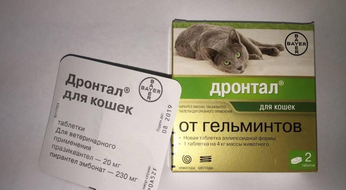Глисты у кошек и собак - как обнаружить и лечить