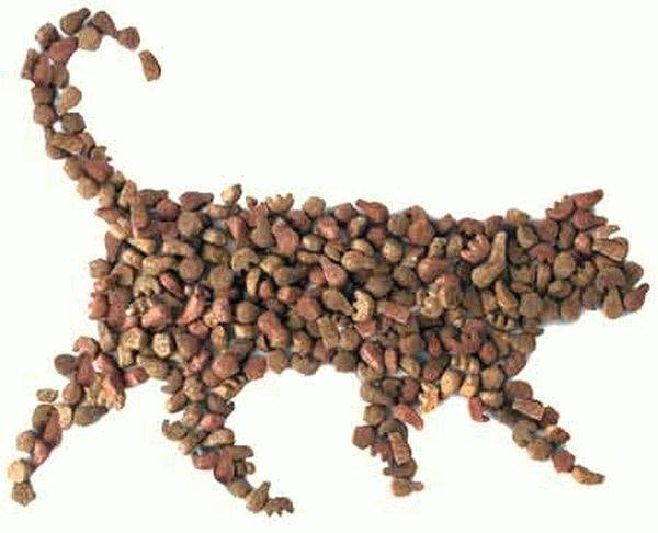 Питание кошек сухим кормом