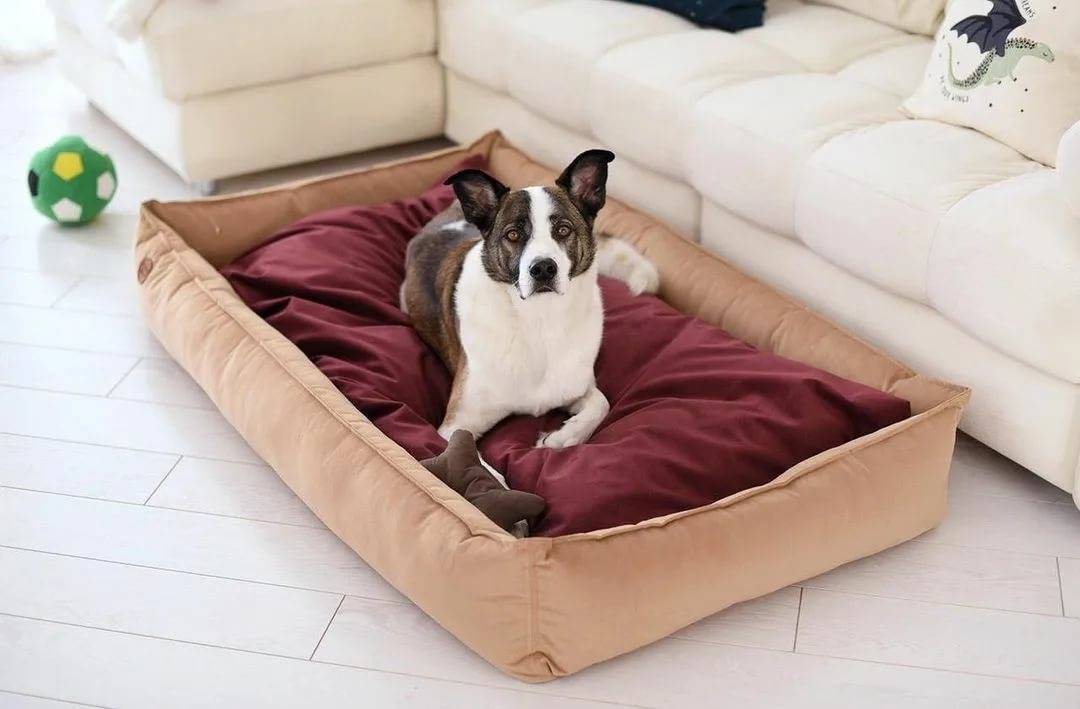 Лежанка для собаки: как выбрать комфортное место питомцу?