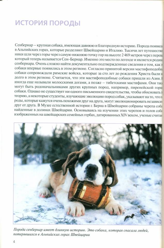 Порода собак сенбернар: описание, фото, характеристика, содержание, уход, воспитание, болезни