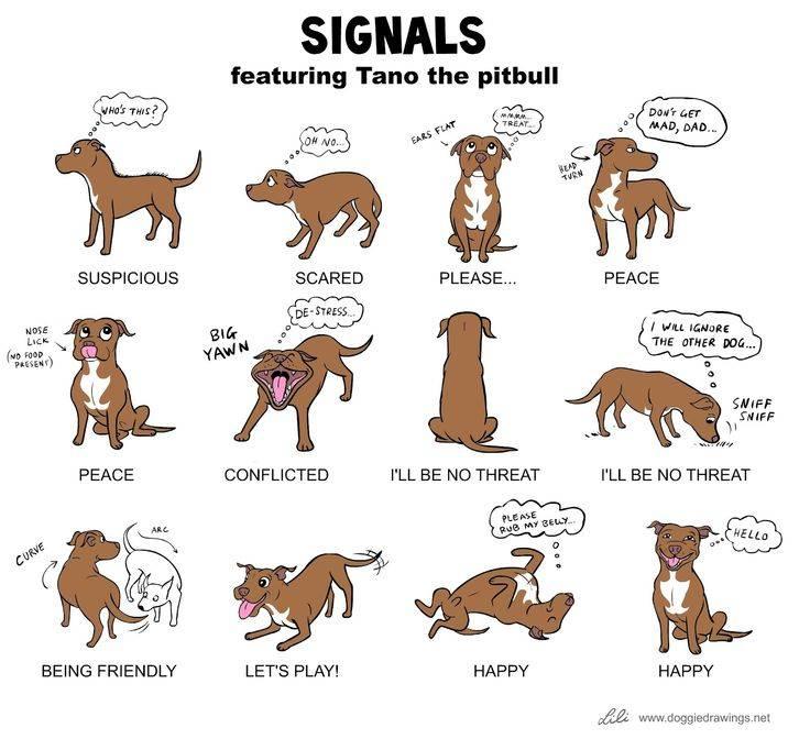 Надо ли очеловечивать собак