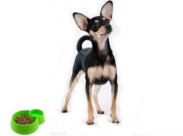 Кормление собак сухим кормом и натуральной пищей