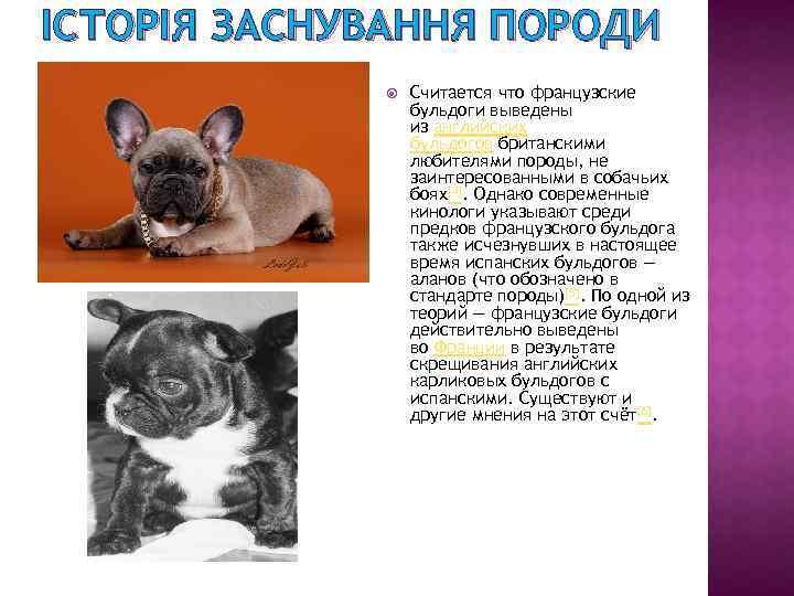 Выбор щенка французского бульдога, обучение основным командам, приучение к лотку, выгул на улице, ежедневный уход за собакой.