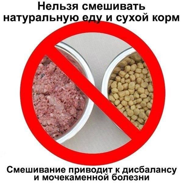 Можно ли кормить человеческой едой домашних животных?