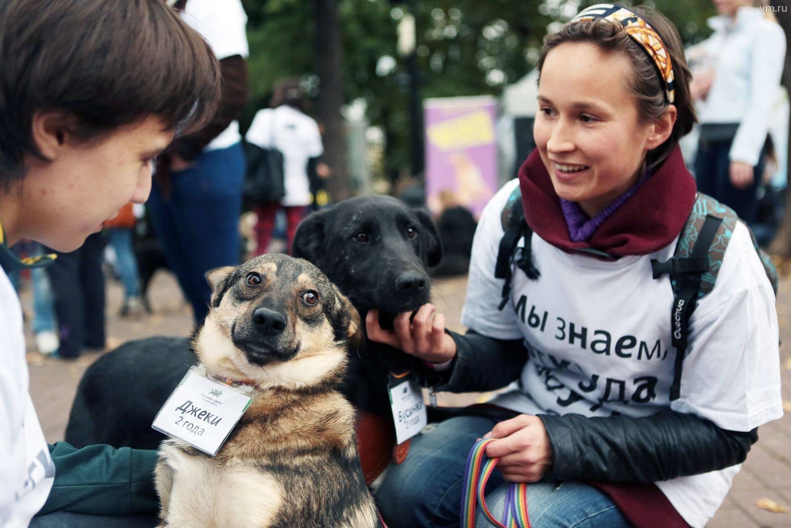 Короткий путь домой: как «пасхальный дар» помогает бездомным животным