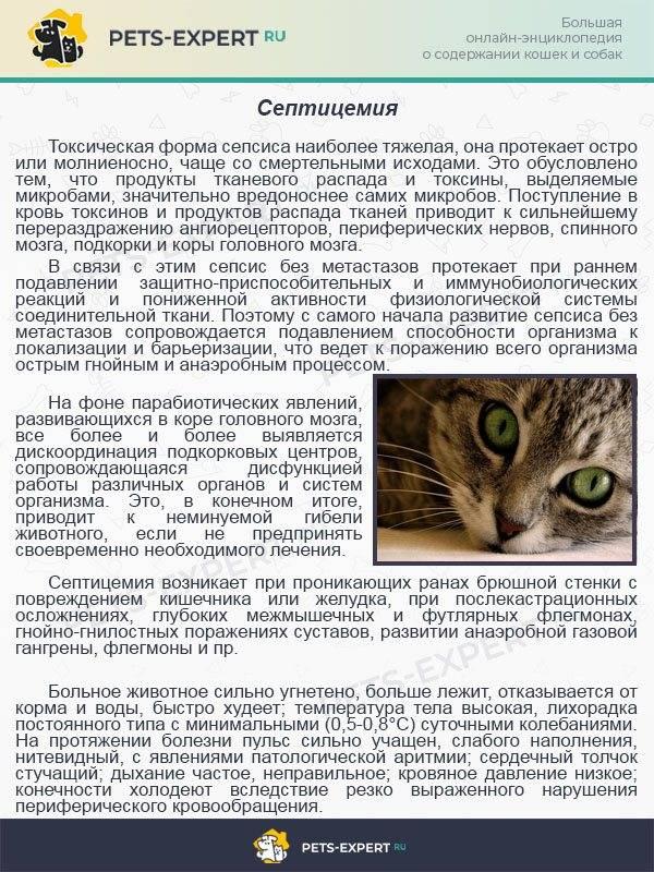 Применение байтрила в терапии для кошек
