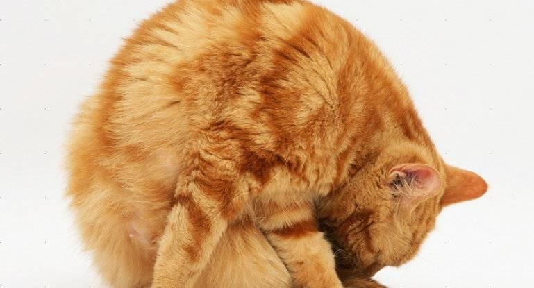 7 неочевидных причин, почему кошка настойчиво лижет руку