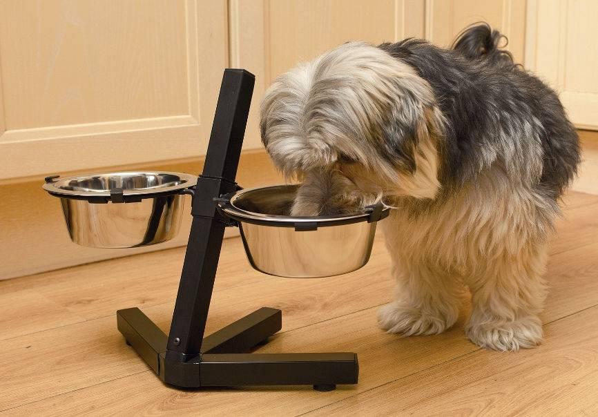 Какие бывают миски для собак на подставке, керамические и металлические, размеры и цена