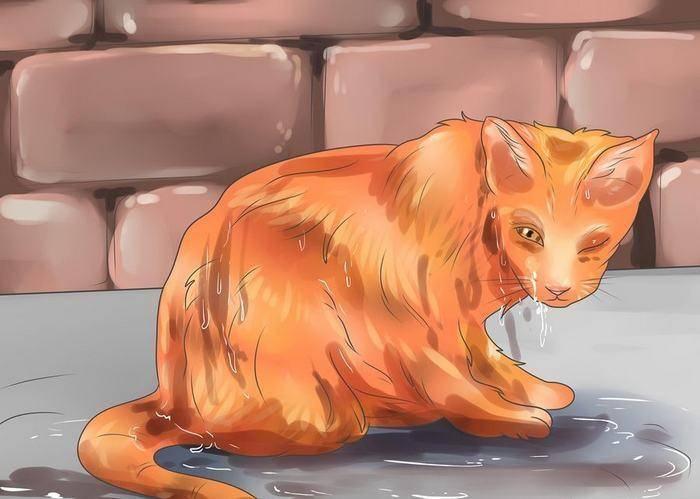 Как приручить кота и так ли это просто