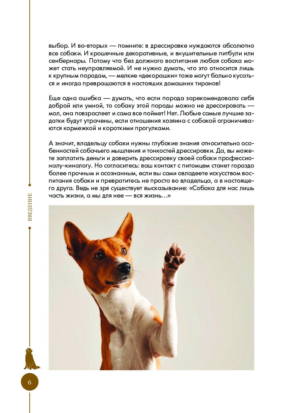 Как воспитывать французского бульдога и как дрессировать щенка