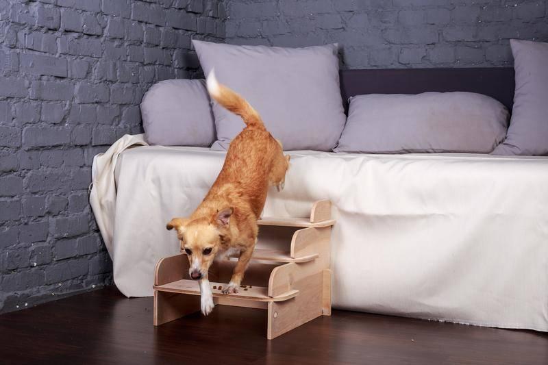 Лестницы для собак: ступеньки для собак мелких и крупных пород. как выбрать лесенку?
