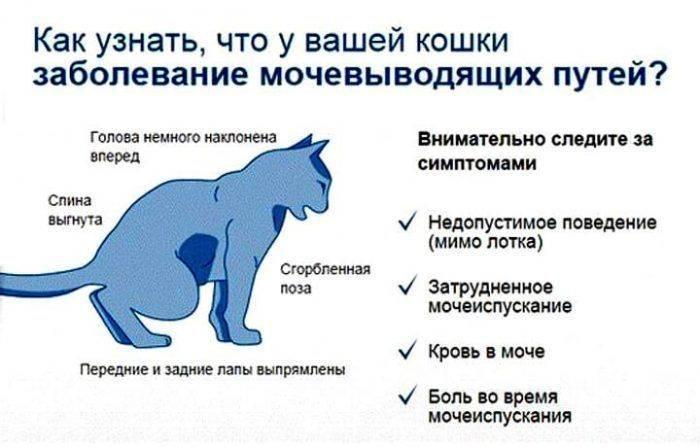 """Подробный список болезней кошек с лечением - ветеринарная клиника в зеленограде """"polivet"""""""