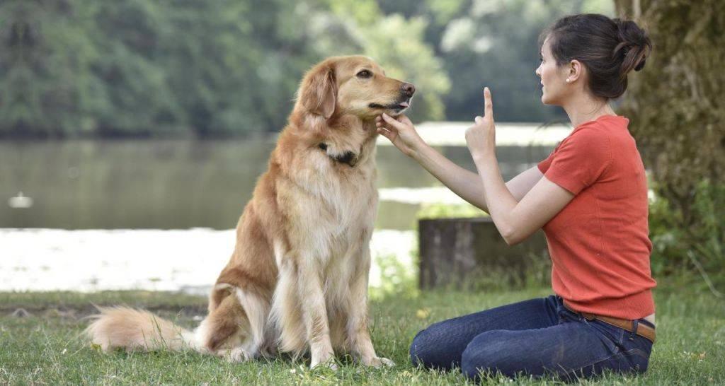 Как собаки улучшают здоровье своих хозяев?