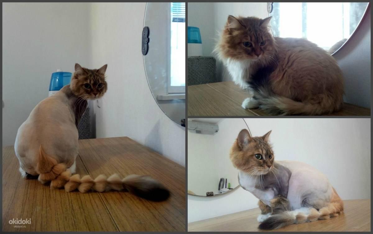 Что будет, если коту обрезать усы — последствия, как помочь кошке