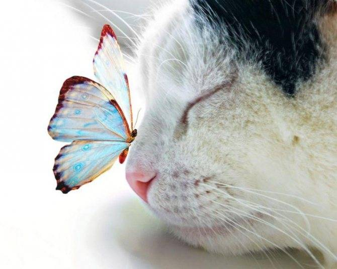 Почему у кошки сухой или влажный нос