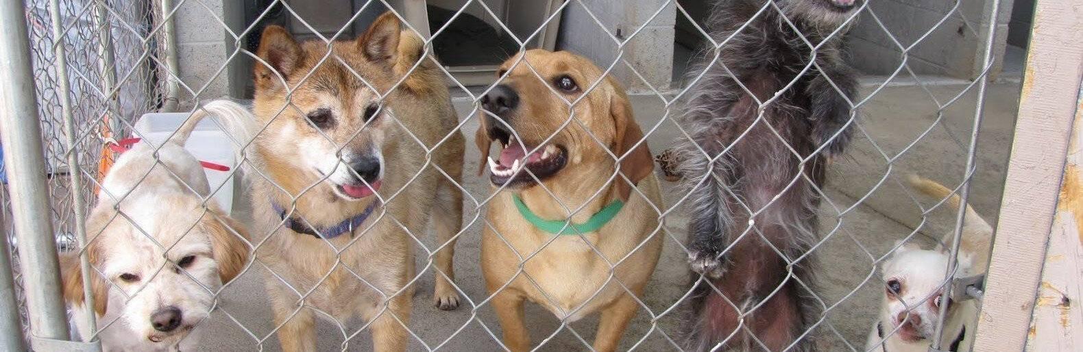 Защитники животных стремятся выиграть тендер на отлавливание бездомных собак