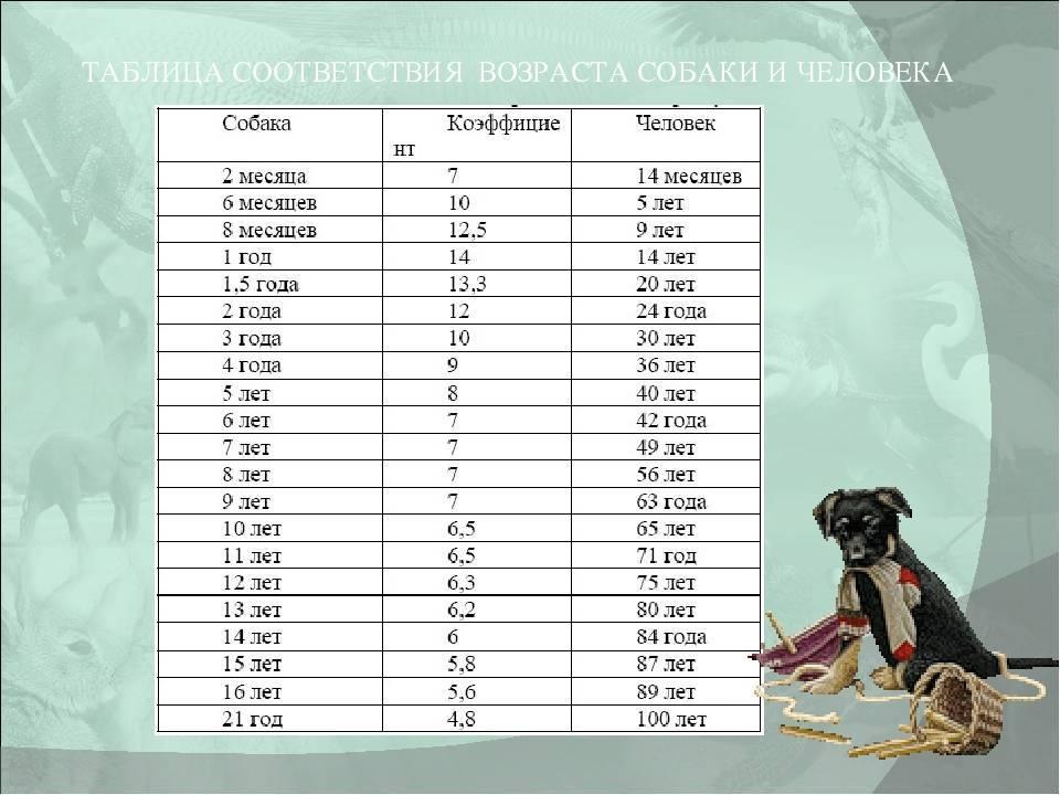 Сколько живут собаки? продолжительность жизни собак ?