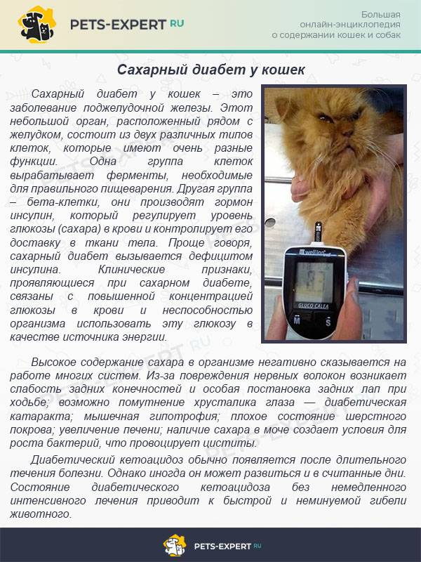 Распространенные возрастные симптомы у пожилых кошек