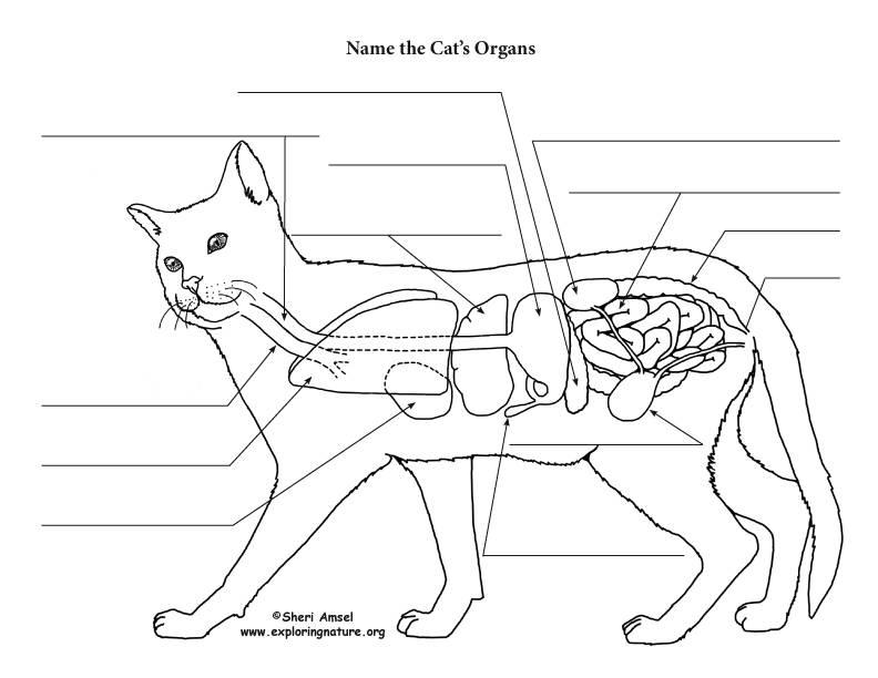 Ультрасонографические различия органов брюшной полости собак и кошек – статья о лечении животных ивц мва