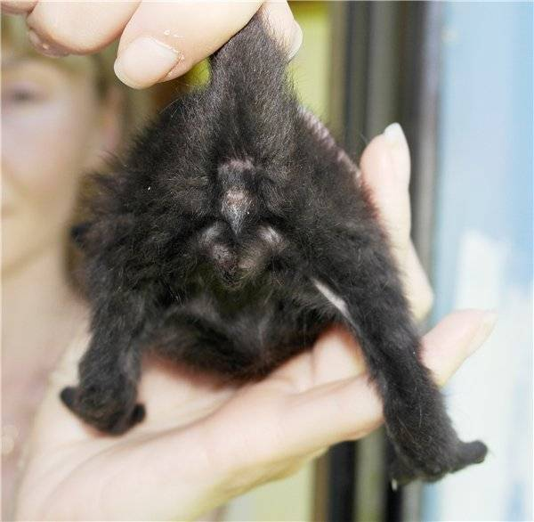 Как узнать пол котёнка: разные способы от физиологии до поведения