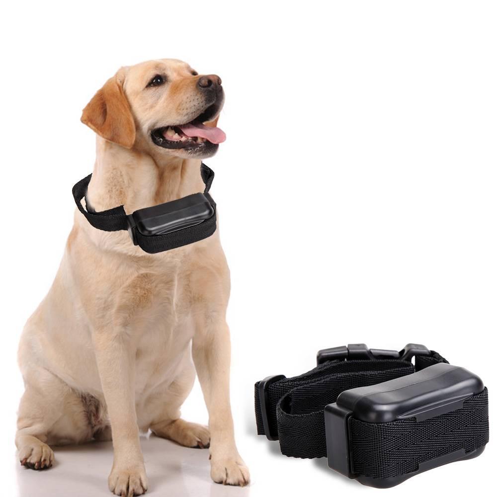 Почему стоит отказаться от электроошейника для собаки