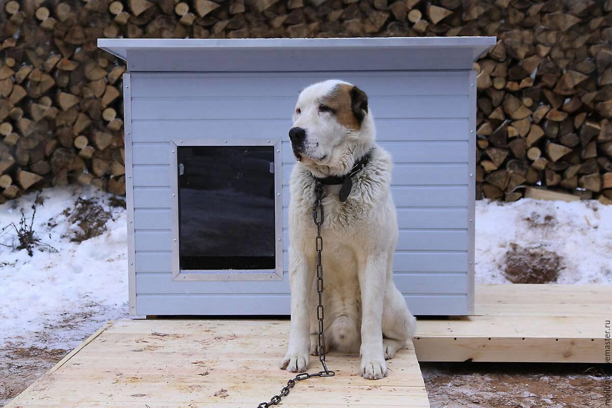 ᐉ как приучить собаку оставаться во дворе вашего дома без привязи - ➡ motildazoo.ru