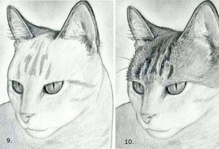 Как нарисовать кошку: 9 пошаговых инструкций - лайфхакер