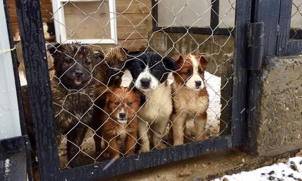 Муниципальные и частные приюты для собак и кошек в москве и московской области