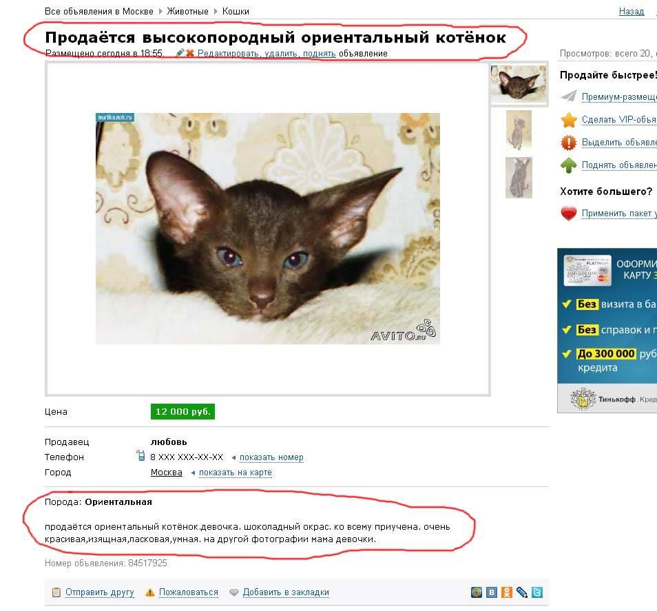 Как выбрать котенка: 10+ советов, вопросы к продавцу