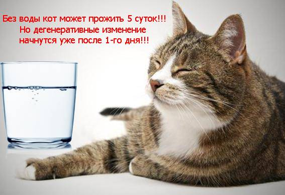 Сколько домашние кошки могут прожить без еды и воды