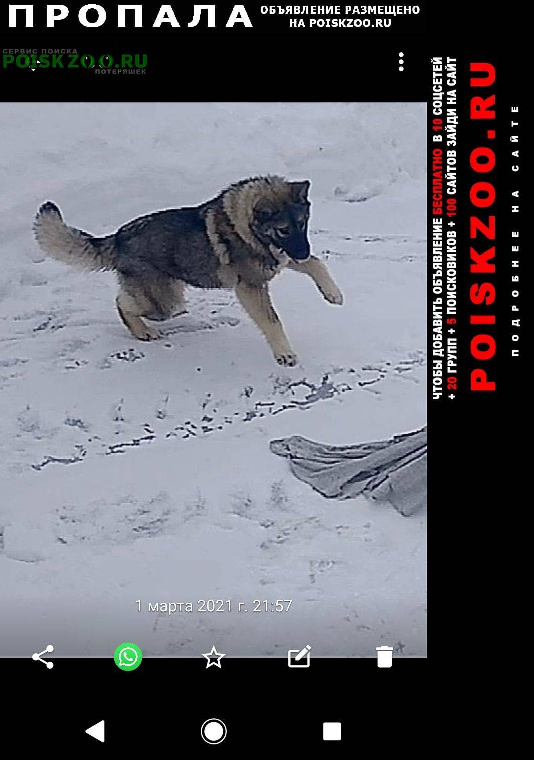 Какие собаки у путина: породы, имена, фото