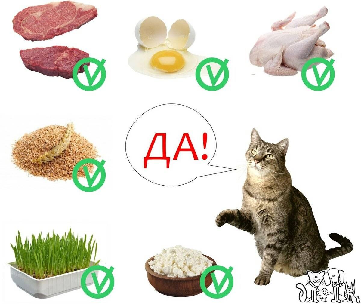 """Натуральное питание для кошки. составление правильного рациона для кошки   нпк """"скифф"""""""