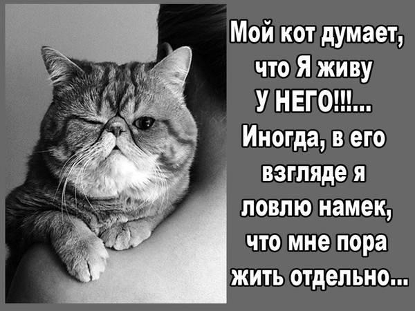 Умеют ли думать собаки? - brainapps.ru