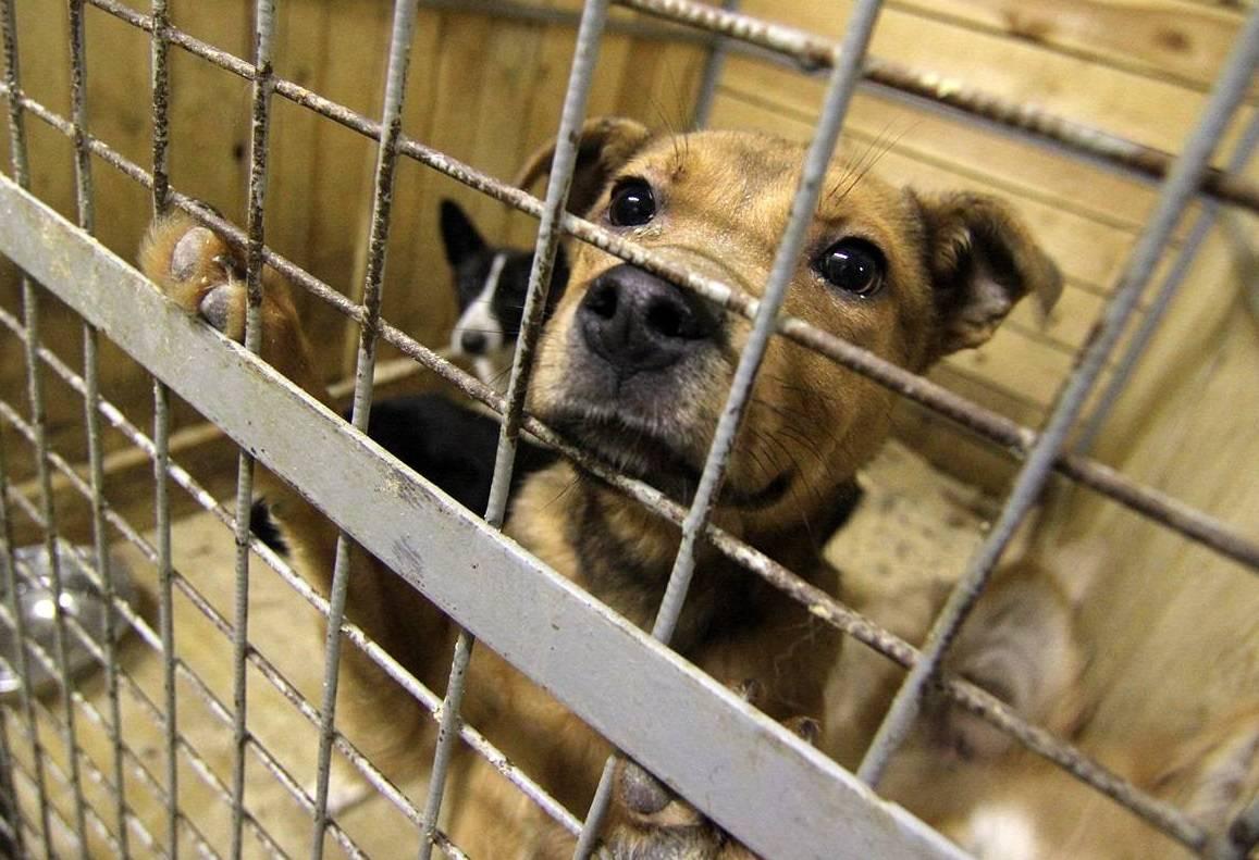 Приют для собак — что это такое и условия содержания животных