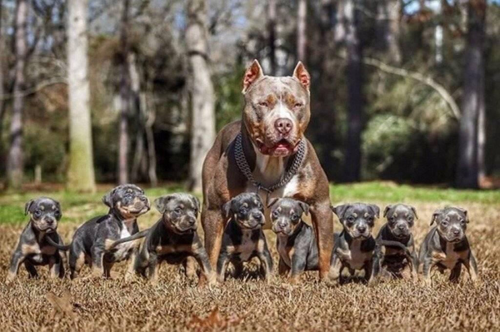 Самые лучшие породы собак в мире, рейтинги топ 10: красивые, сильные, преданные, умные, большие, хорошие
