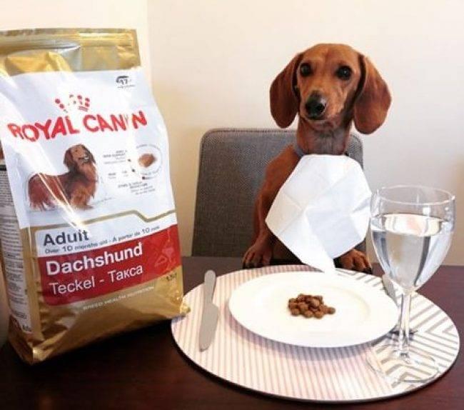 Чем кормить таксу взрослую и щенка в домашних условиях