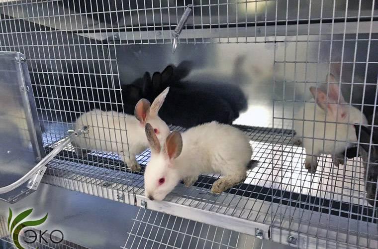 Бизнес-план разведения кроликов с расчетами