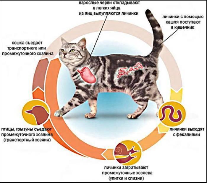 Адвокат для кошек: 125 фото противопаразитарных средств и видео их применения