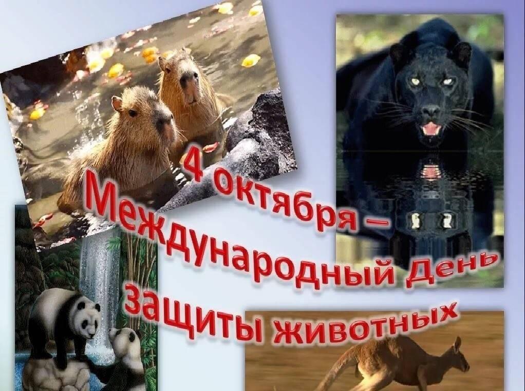 Праздники животных