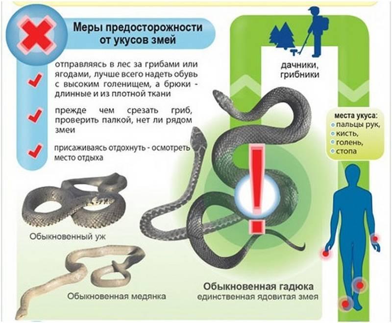 Что делать если укусила змея - первая помощь человеку при укусе ядовитой гадюки в лесу