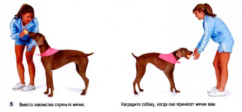 Команды для собак: когда и как обучать