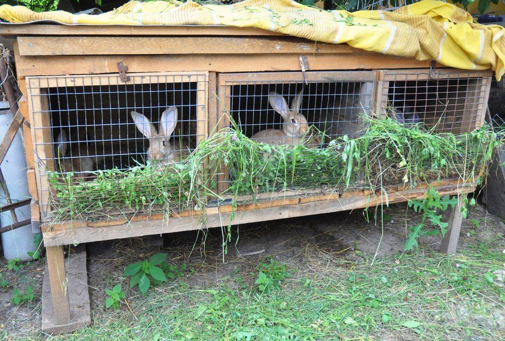 Как разводить и содержать кроликов в домашних условиях | делайсам.ру