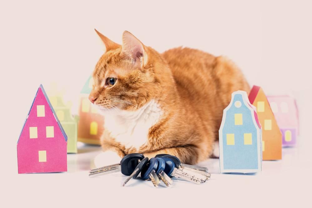Как приучить кошку к новому дому. советы от эксперта. новый дом и новые хозяева для кошки как долго кот привыкает к новому месту