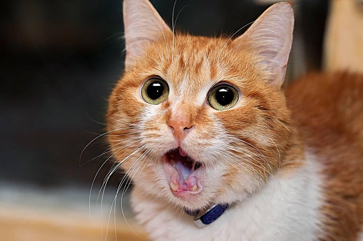 Почему мурчат коты: разгадка тайны пушистых любимцев